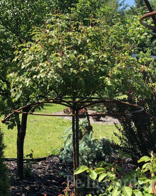 Опора для растений Зонт